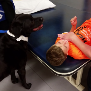 Watch This Friendly Dog Help a Brain Surgery Patient Get Through Therapy