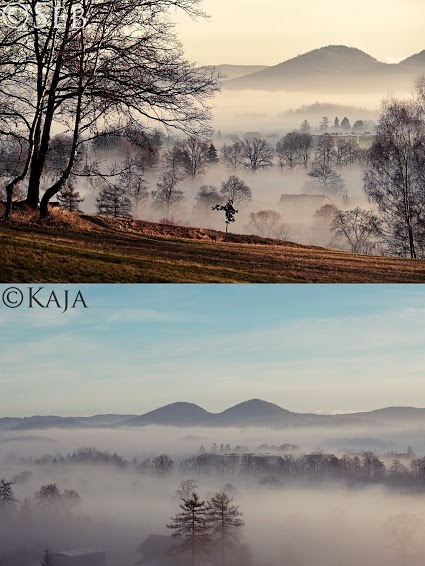 Treetops in fog from two different angles