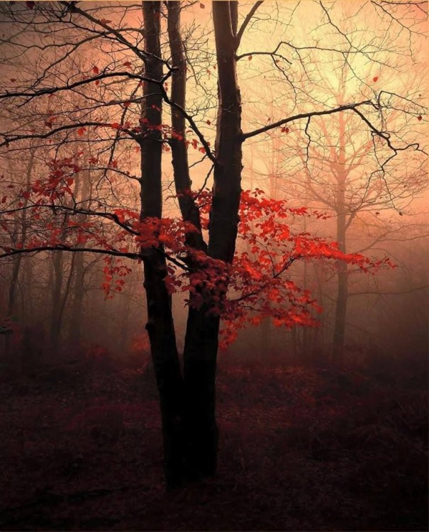 A tree in the woods with red leaves