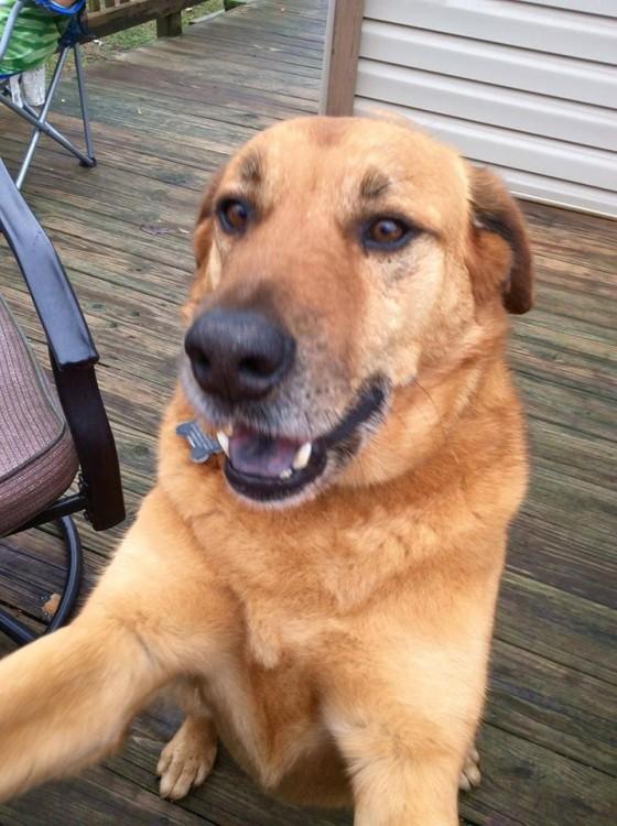 "Light brown dog taking a ""selfie"""