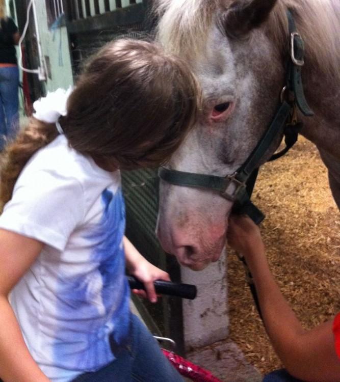 (Photo: Facebook/Horses For Lex)