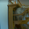 A cat going up a flight of stairs