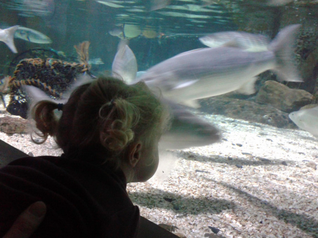 A child looking at a fish tank.