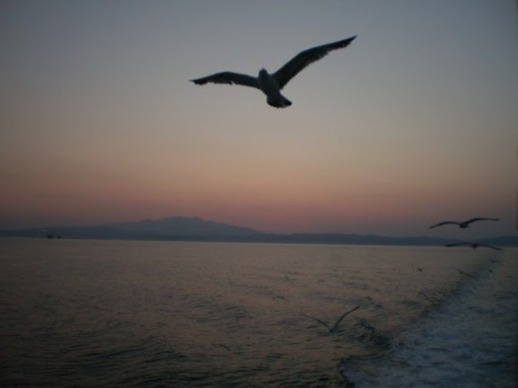 Kosmas-Karikas-Bird