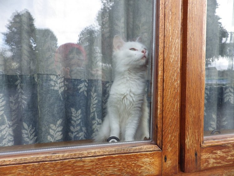 Robbie-Snowden-Kitten-in-Window