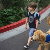 A young boy with his service dog