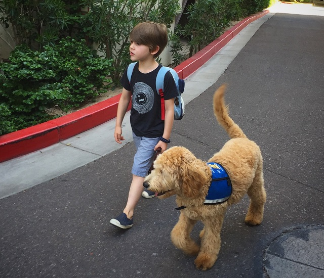 The author's son walking with his service dog