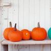 a picture of a teal pumpkin amongst orange pumpkins