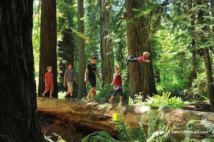 Wil-Flies-in-the-redwoods-low-res-1024x681
