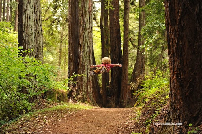 wil-can-fly-redwoods-blog-1024x681