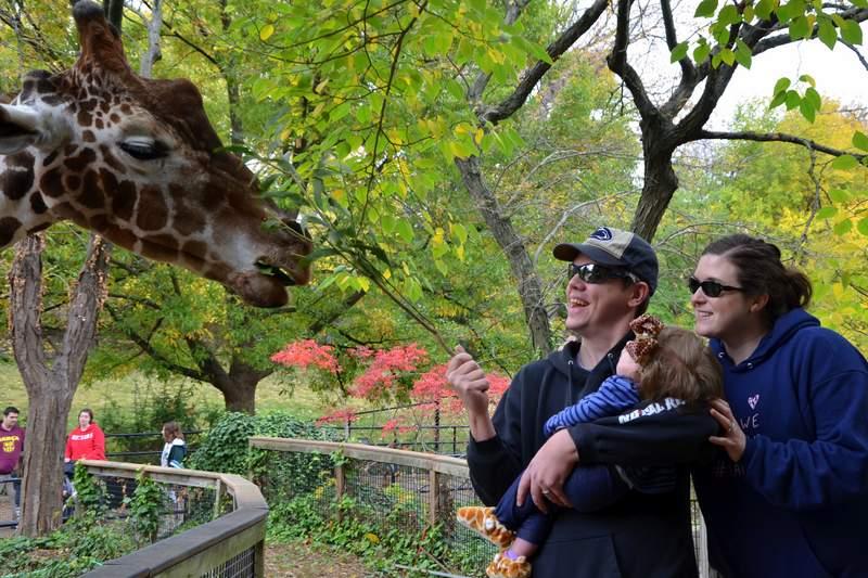 mom dad and tori looking at a giraffe
