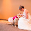 A service dog soothing his owner on her wedding day
