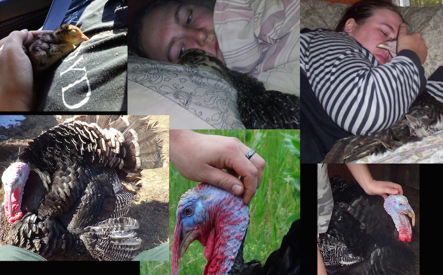 A collage photos of a woman with her turkey therapy animals