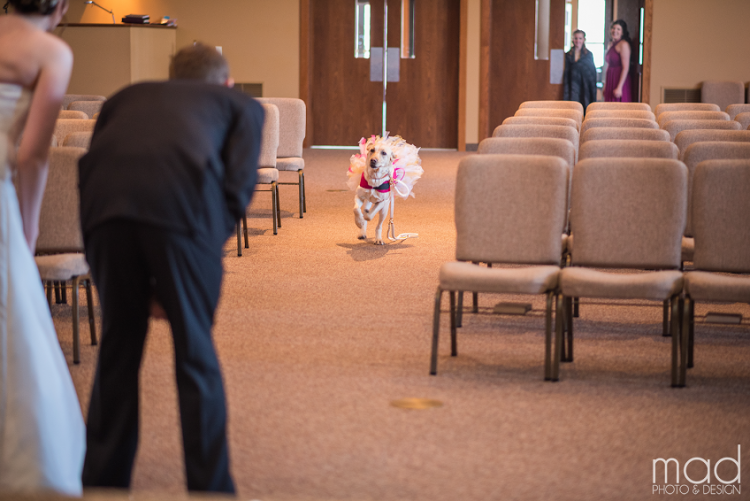 Bella the service dog running down the aisle.