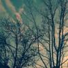 bare trees against sunset sky