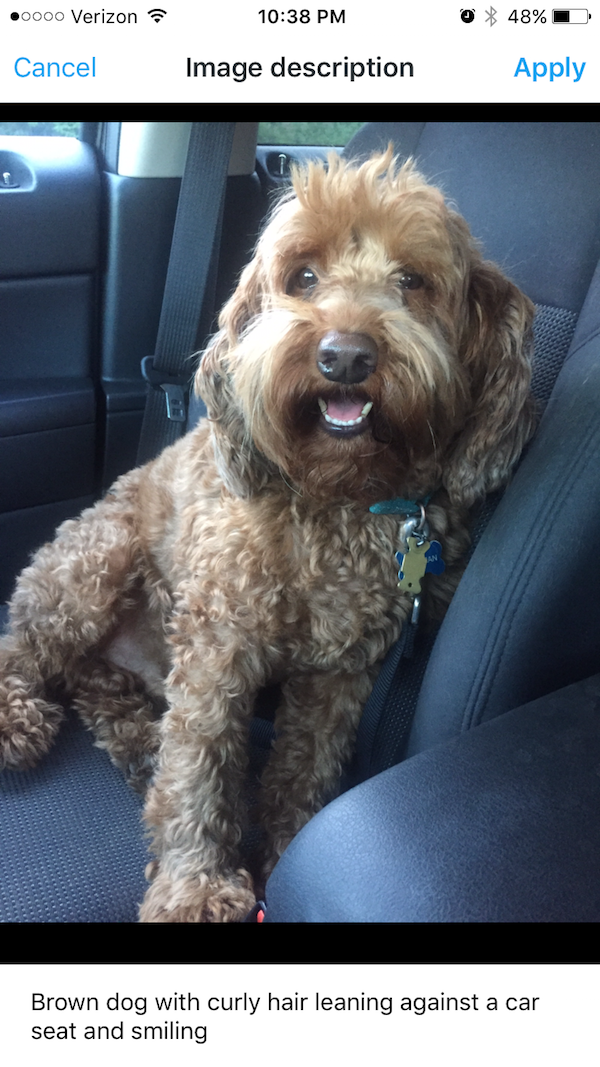 """screen grab example of Twitter app, showing what happens when you click """"add description."""" under the photo of the dog, user has written """"brown dog with curly hair leaning against a car seat and smiling"""""""