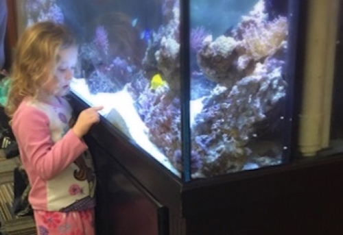 girl looking at aquarium tank
