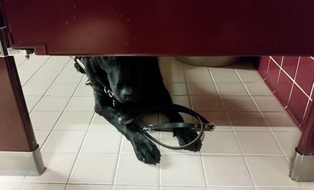 Service dog in a bathroom.