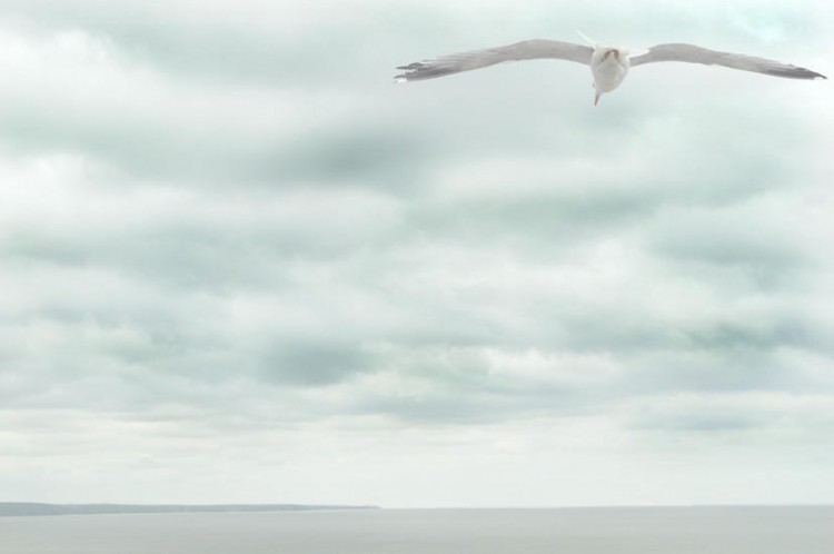 a sea gull flying over the ocean with the backdrop of a cloudy sky