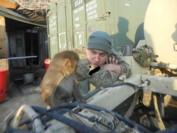 A solder staring at a monkey