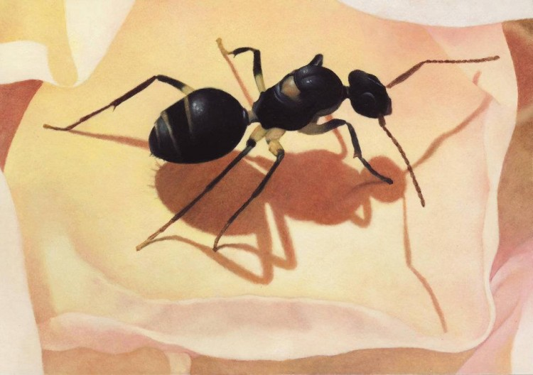 painting of an ant on a rose petal