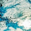 sunny sky with clouds and tree branches