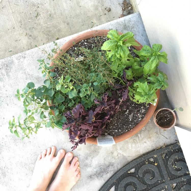 woman's feet standing next to a pot of herbs