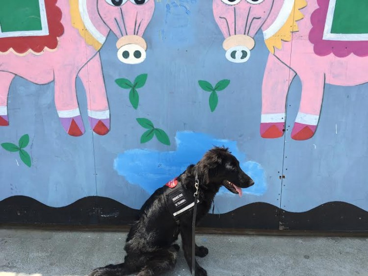 black service dog sitting in front of colorful mural