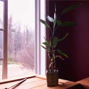 A bamboo plant sitting on a window sill