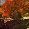 People sitting on a rock in Central Park, New York City, in the fall