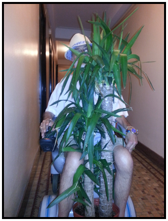 Felix carrying plants.