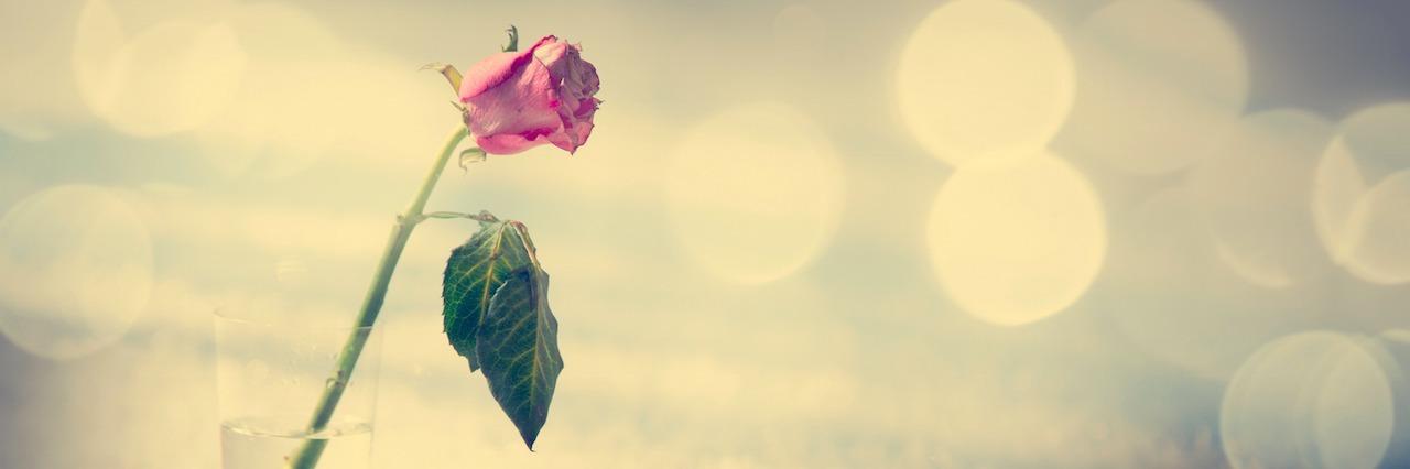 rose in a jar