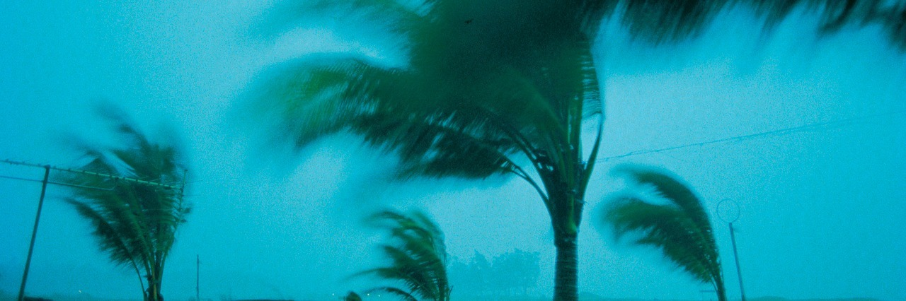 palm trees in a storm, blowing in the wind