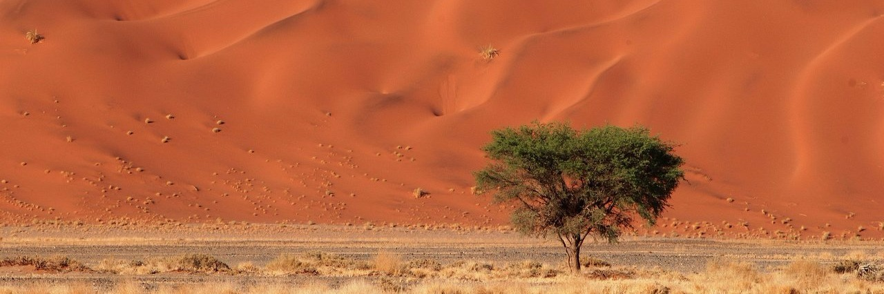 sand dunes and tree
