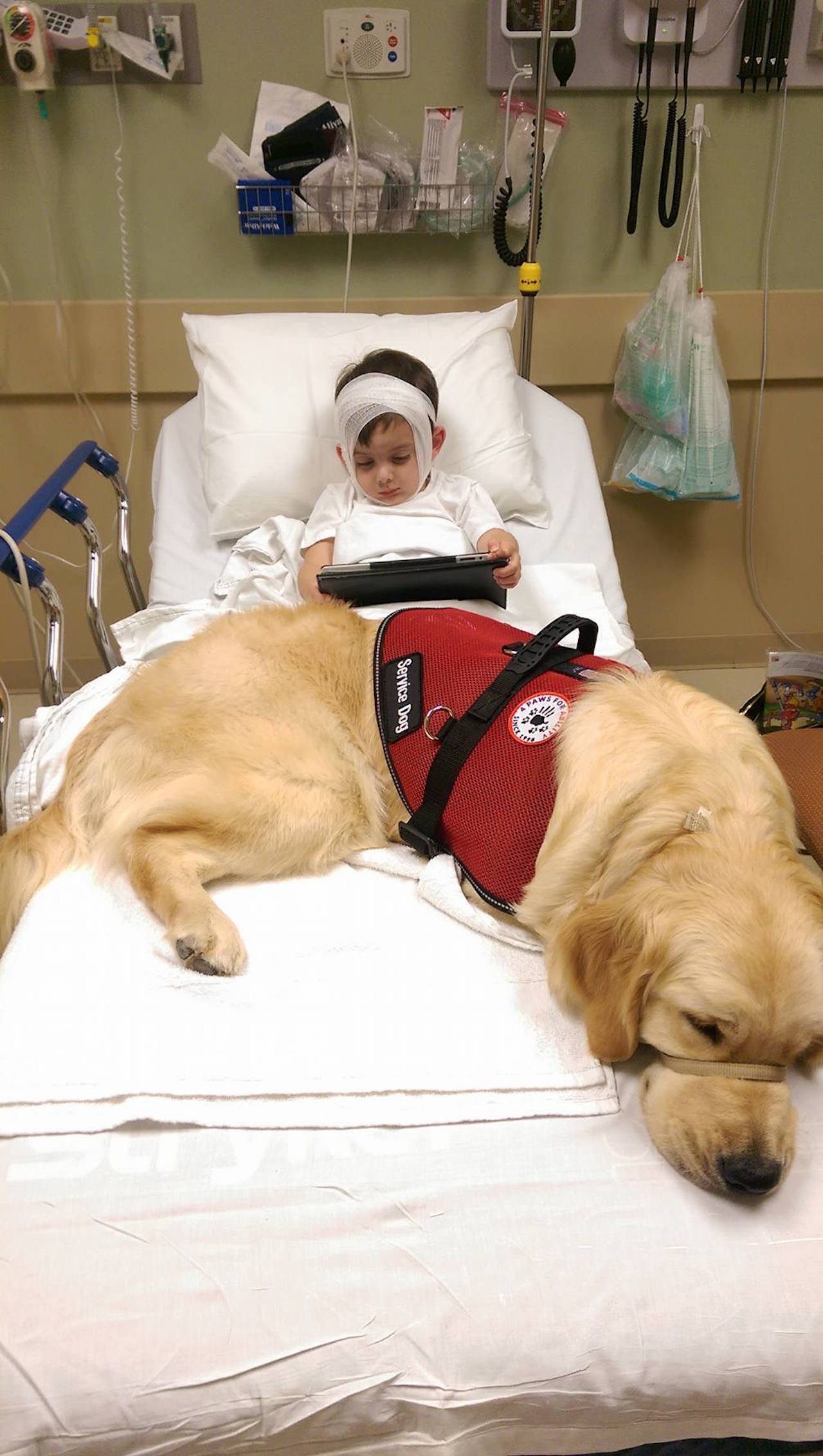 little boy in a hospital bed with a service dog