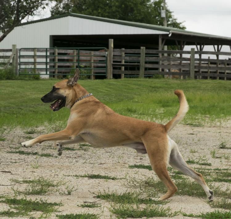 Robbie running in an open field