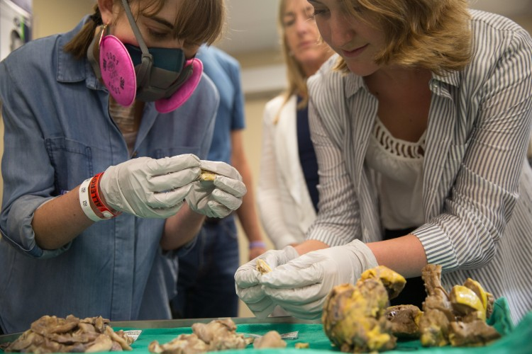girl wearing breathing mask and another woman looking at heart and lungs on table