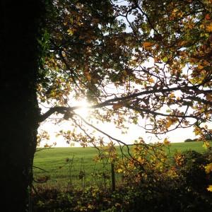 sunlight filtering through tree branches