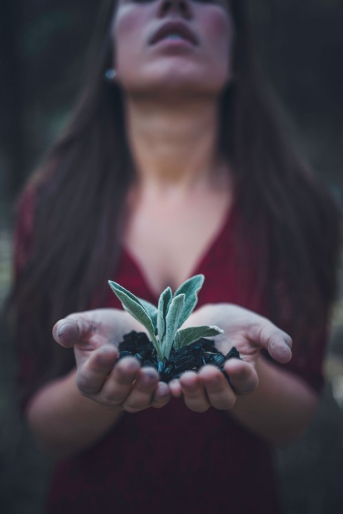 hands holding small plant in hands