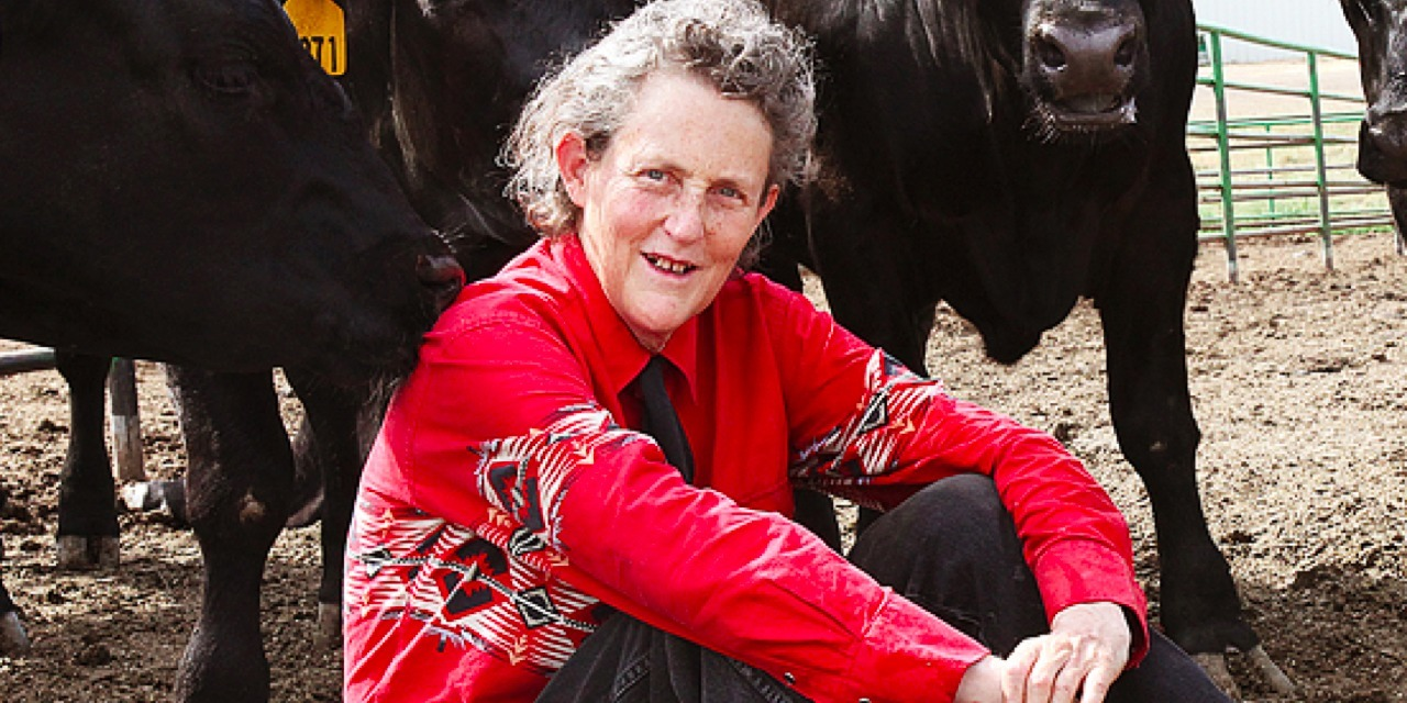 You Asked, Temple Grandin Answered
