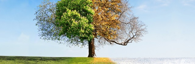 single tree with all four changing seasons
