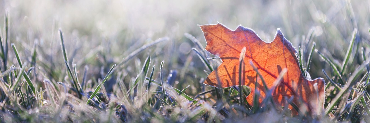 fallen leaf in grass covered in morning frost