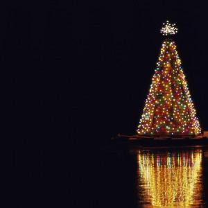 Illuminated Christmas tree at night.