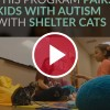 kid with autism playing with shelter cat