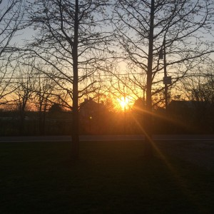 sunset through trees and branches