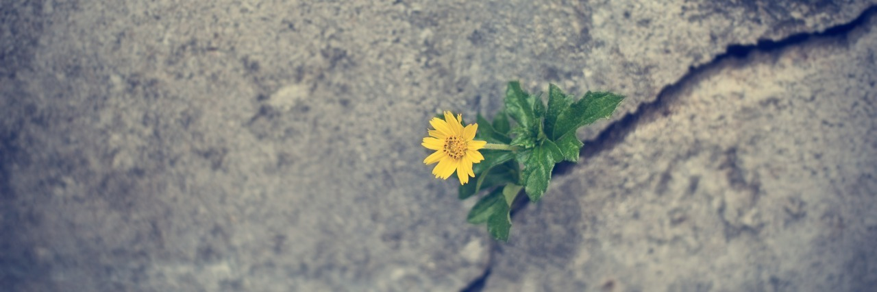small yellow flower growing though a crack in the concrete