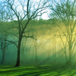 Trees surrounded by mist with sunlight filtering through in winter