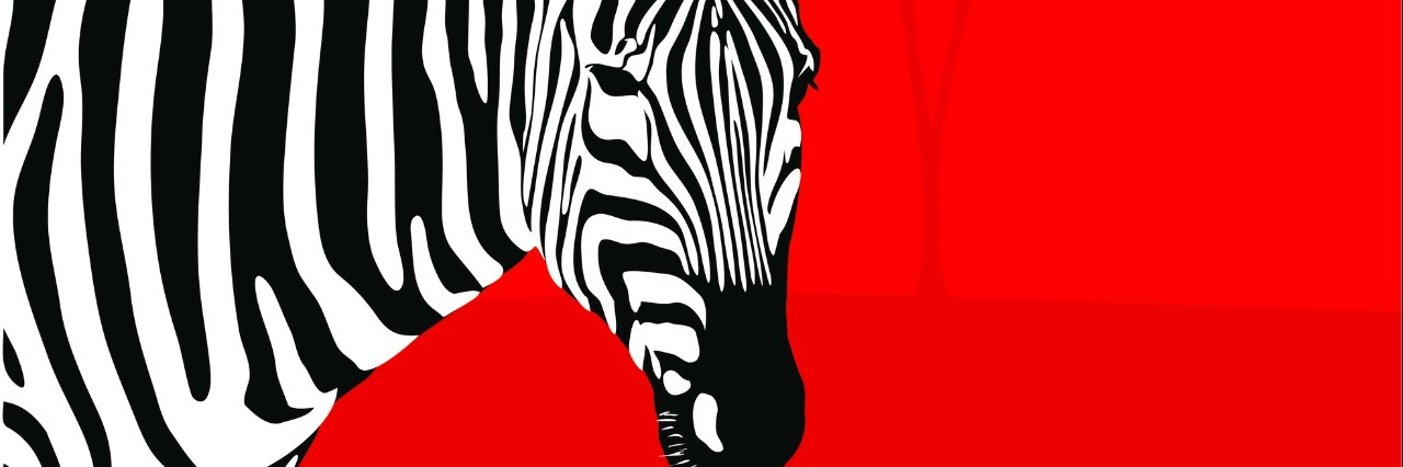 zebra on red background