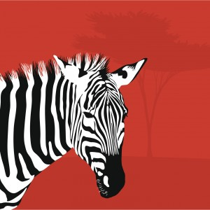 zebra on red background