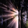 light behind forest trees